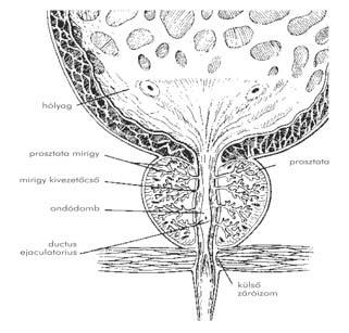 alsóbbrendűségi érzés gyermekkorban neuroendokrin rák nccn