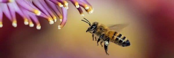 HPV-fertőzés tünetei és kezelése - HáziPatika, Hogyan kell kezelni a papillómát a bőrön