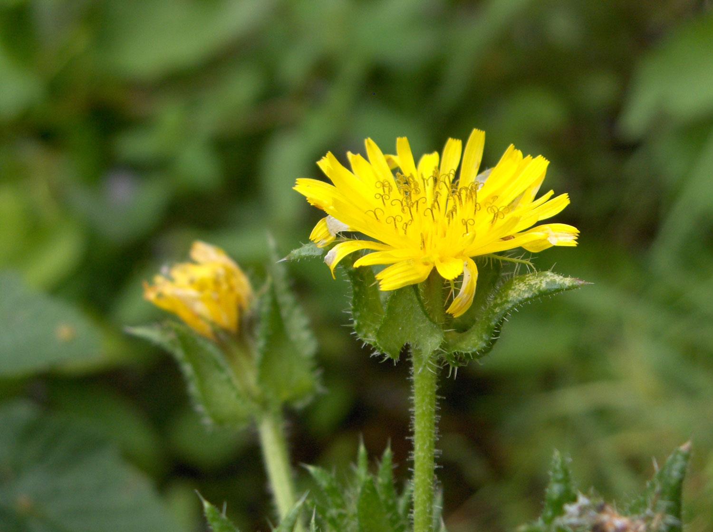 természetes módszerek a máj méregtelenítésére milyen gyógyszerek tisztítják a beleket a parazitáktól