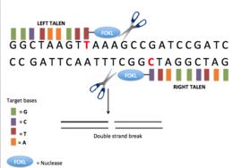 rák és géntechnológia