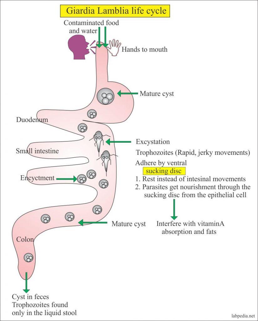 margineanu paraziták parazita az emberi bőr kezelése során