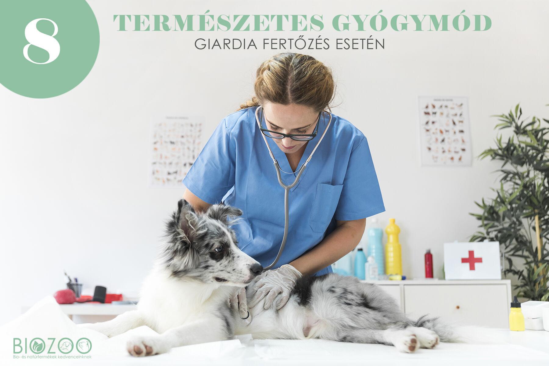 tünet giardia kutyák