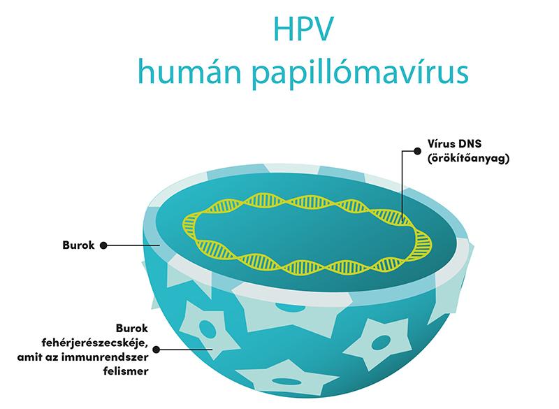 a hpv vírus rák
