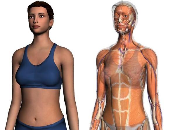 hogyan lehet meggyógyítani az emberi testet nagy szemölcsök élni