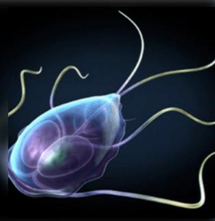 parazita az emberi bőr kezelése során a hpv szemölcsök meddig tartanak