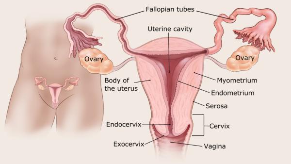 Méhtestrák tünetei és kezelése