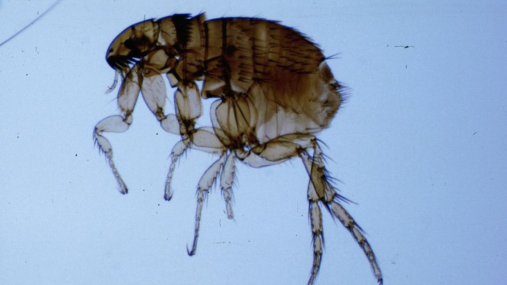 Paraziták jelenléte a szervezetben - A paraziták jó minőségűek