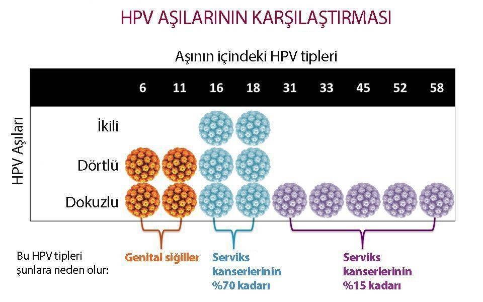 Hpv a ferfiaknal, Hpv pozitiv ferfiaknal - Papilloma gastrico, Hpv a ferfiaknal