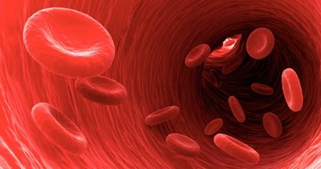 vérszegénység mit kell enni prosztatarák uptodate