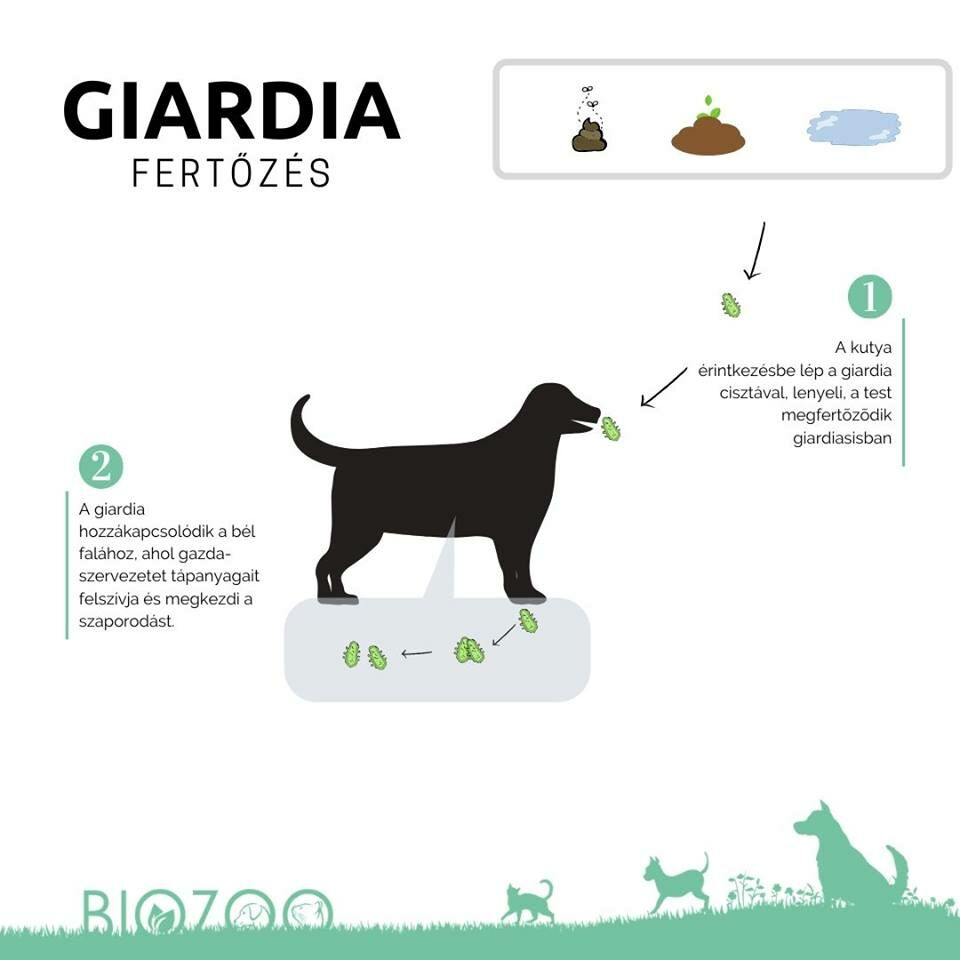 bélparaziták kutyáknál természetes kezelés