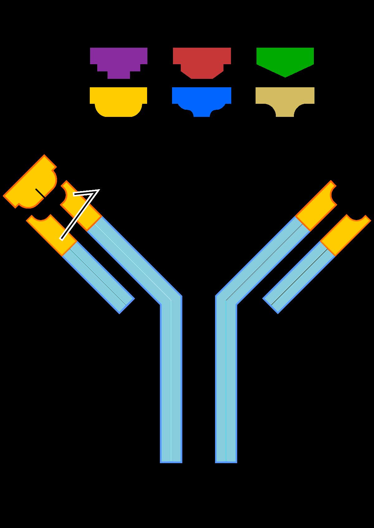 antitestek széles sávja