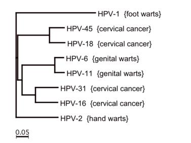 pozitív humán onkogén papillomavírus hpv száraz bőr