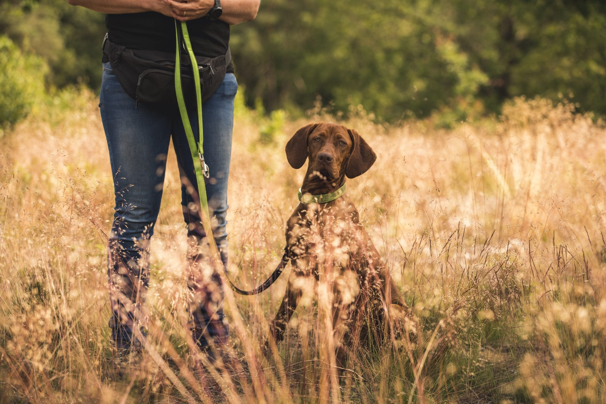 tünetek giardia bij honden