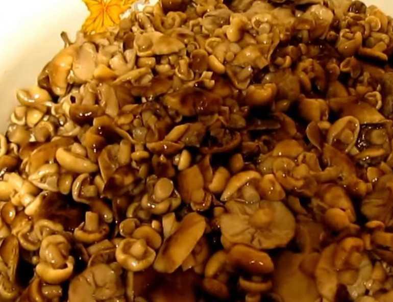 Gomba: zsírok, fehérjék, szénhidrátok. Kalóriatartalom