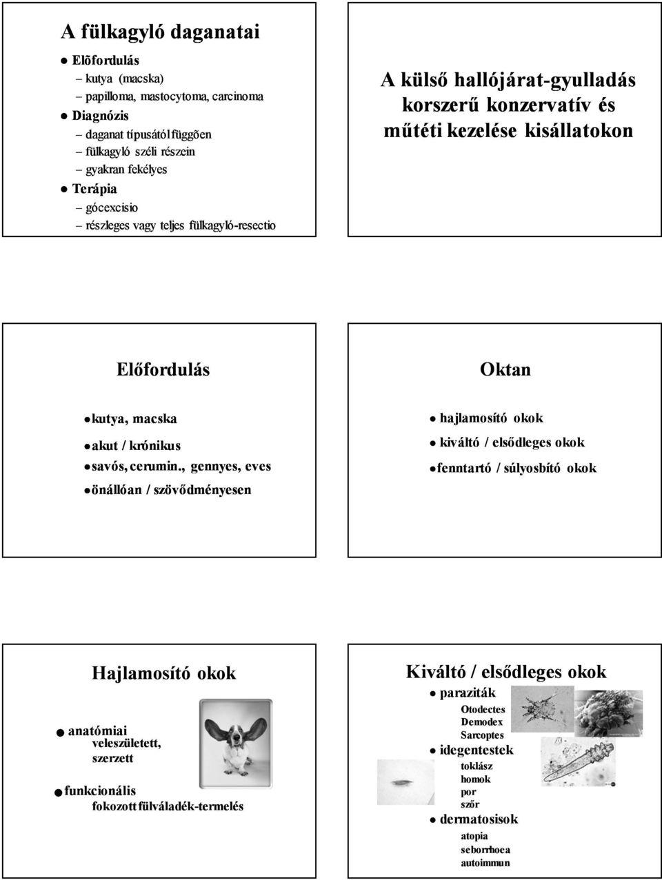 hogyan kell kezelni a papilloma parazitákat giardia zwangere vrouw