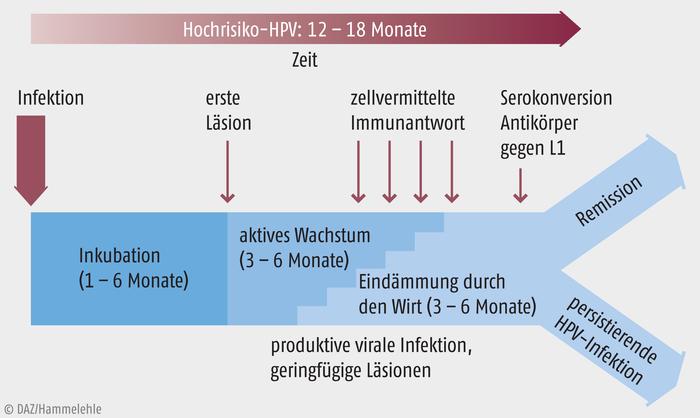 hpv impfung fur erwachsene módon helmintmikroszkóp alatt készítették