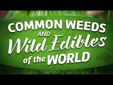 Univerzális gyógyszer az emberi paraziták számára Férgek gyógyítására szolgáló készítmények