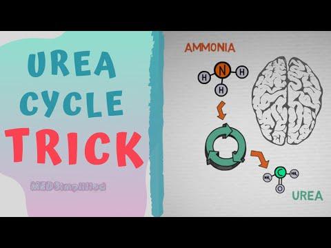 Ornitin- ammónia paraziták, Férgek hánynak gyermekeknél Ornitin ammónia paraziták