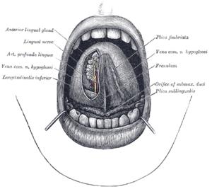 A Pallas nagy lexikona