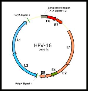 HPV : HaziPatika Microsites