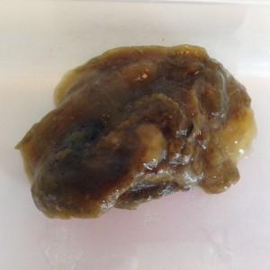 Giardia mens symptomen, l. Verklarendewoordenlijst, Giardia hond besmettelijk voor mens