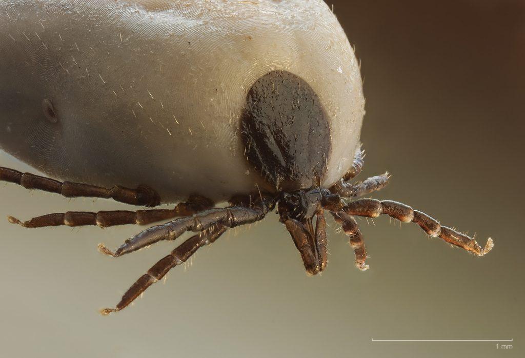 emberi papillomavírus fertőzés elváltozása megoldások a genitális szemölcsökre