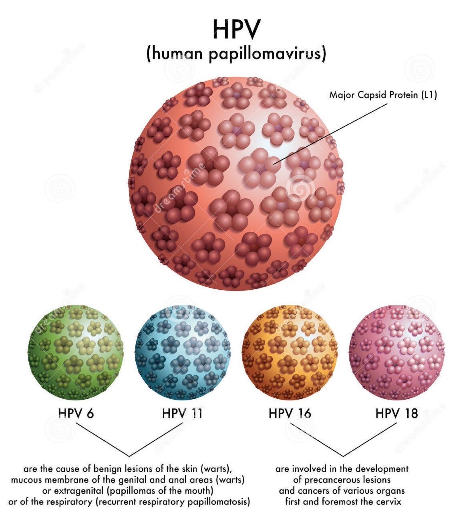 szemölcsök a papillomavíruson