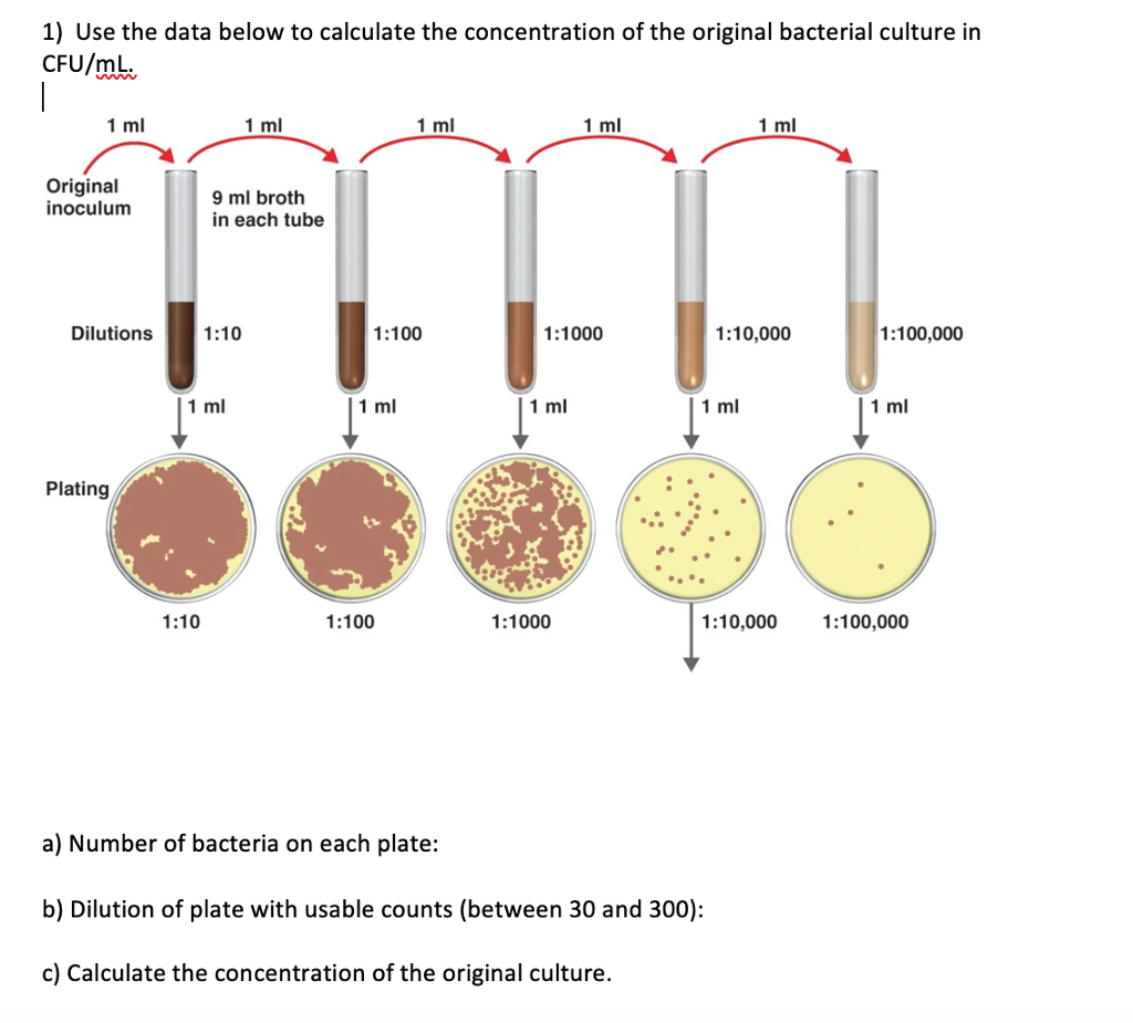Baktériumok találhatók a vizeletben, mit jelent ez? - Nephrosis - October