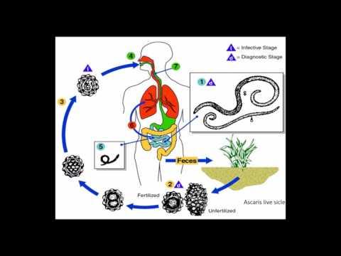 Evolúció (biológia)