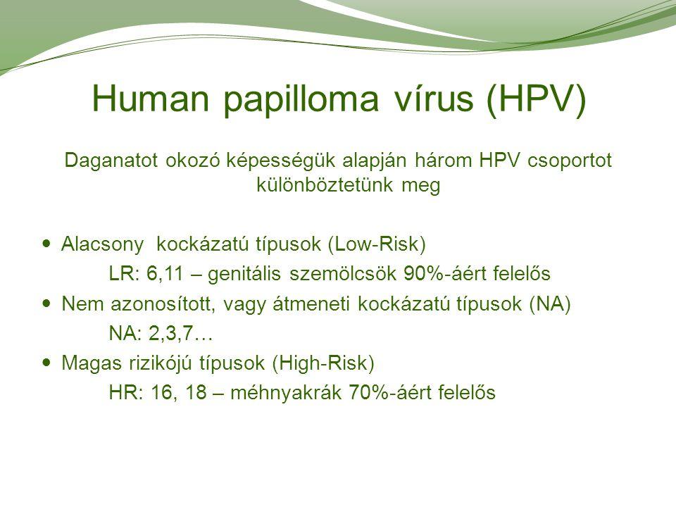 HPV szűrés - Humán Papillómavírus teszt