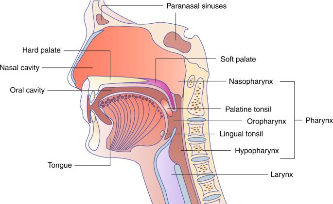 Az emlő jóindulatú daganatai