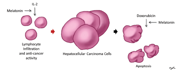 A neuroendokrin daganatok kezelése