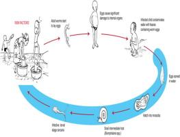 schistosomiasis tó victoria